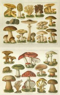 Mushrooms Russia and History